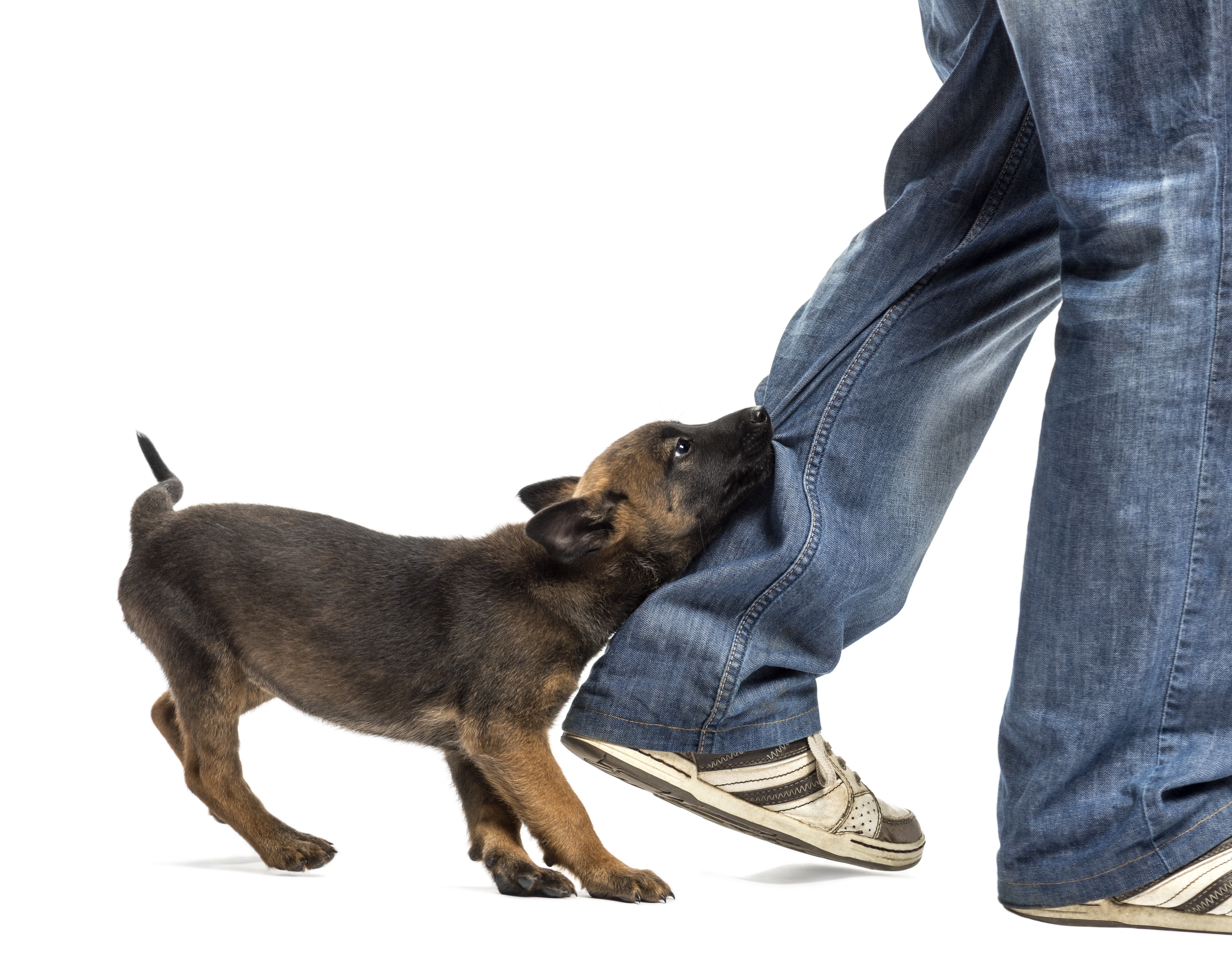 shutterstock 117858019 - Time Limits and NY Rules on Dog Bites